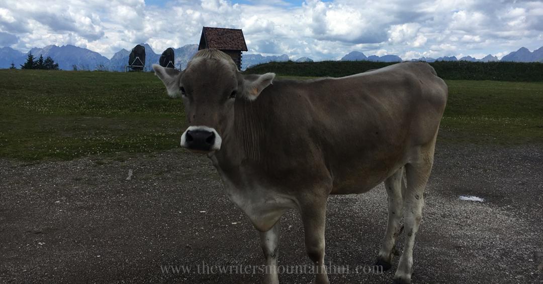 Mucca al Pascolo, Monte Zoncolan