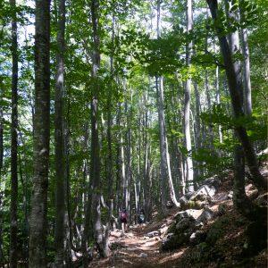 Sentiero verso il Rifugio Grauzaria